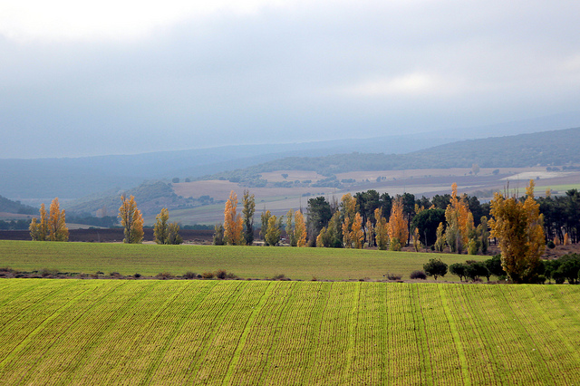 ecologia paisaje - axial